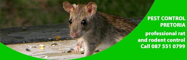 rat traps & bait pretoria