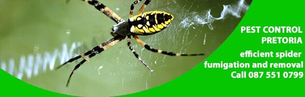 spider removal pretoria